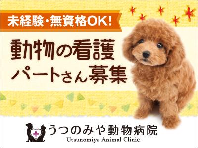 うつのみや動物病院【動物看護】の求人情報