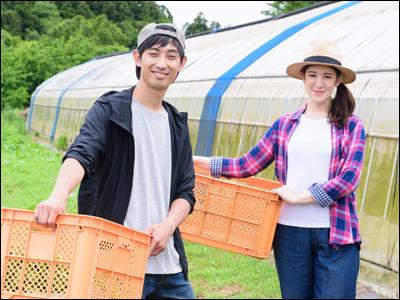 福井農園【ほうれん草の収穫】の求人情報